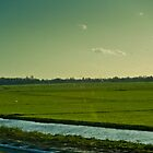 Countryside Outside of Amsterdam by Rachel Nacilla