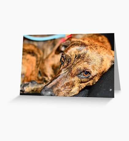 Snooze Hound Greeting Card