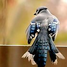 Blue Jay by Robin Lee