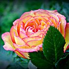"""A Rose Of Beauty"" by Gail Jones"