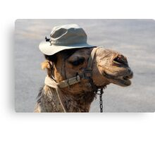 A Camel in a Tilly Hat Canvas Print