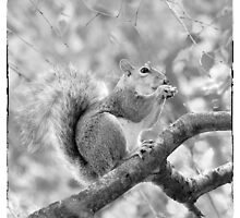 Squirrel in a Tree - Black and White by Natalie Kinnear