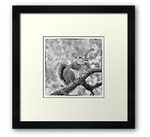 Squirrel in a Tree - Black and White Framed Print