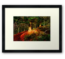 Woodland in Autumn Framed Print