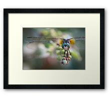 Inquisitive Dragonfly Framed Print