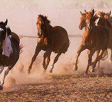 Horses by digoarpi
