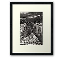 Wild Stallion Framed Print