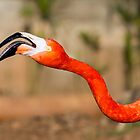 Flamingo by digoarpi