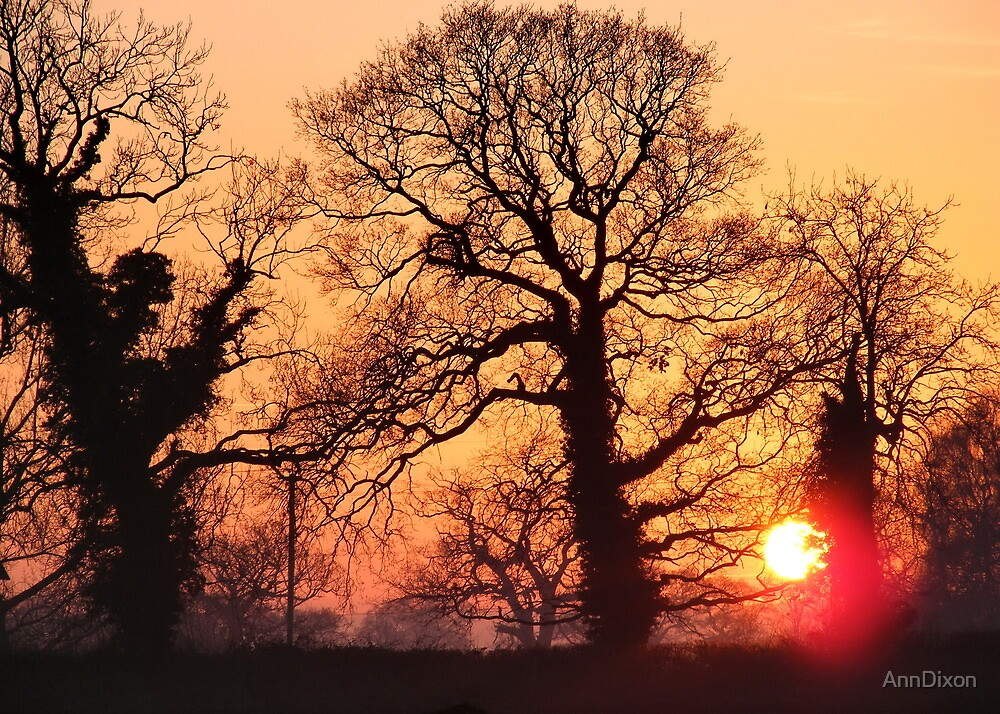 Frosty Evening Sunset by AnnDixon