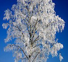 Winter by digoarpi