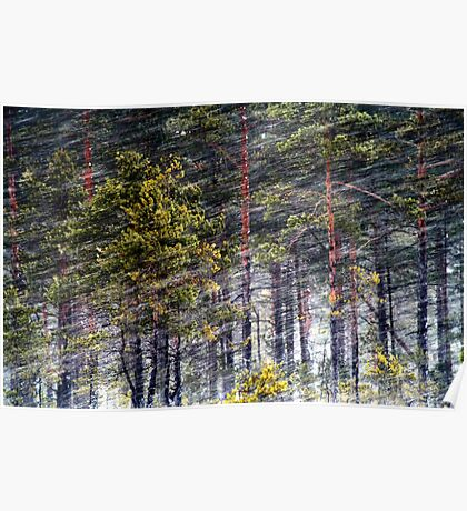 30.1.2013: Pine trees, Blizzard Poster