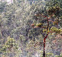 30.1.2013: Pine Tree, Blizzard II by Petri Volanen