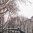 trees in the snow by busteradams