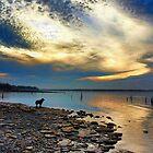 Watch Dog by Carolyn  Fletcher