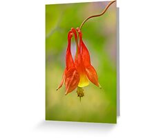 Red Columbine Greeting Card
