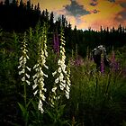 Foxgloves In The Light by Charles & Patricia   Harkins ~ Picture Oregon