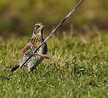 The Track and Fieldfare by Felfriast