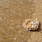 Beach Rock by thruHislens .