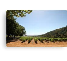 Delheim Winefarm Cape Town Canvas Print