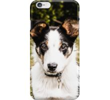 Bertie the Collie iPhone Case/Skin