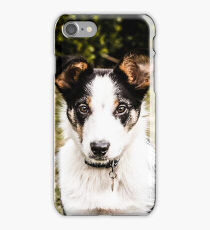 Bertie the Collie iPhone Case/Skin