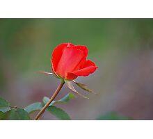 Valentine wish Photographic Print