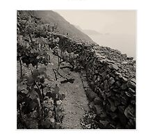 Dry Stone Wall by MassimoConti