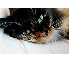 The Green Eyed Monster Photographic Print