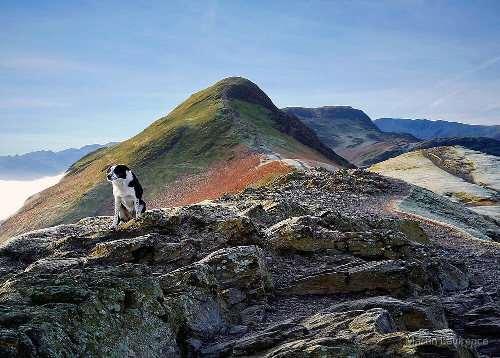 It's a dogs life on the footpath to Catbells by Martin Lawrence