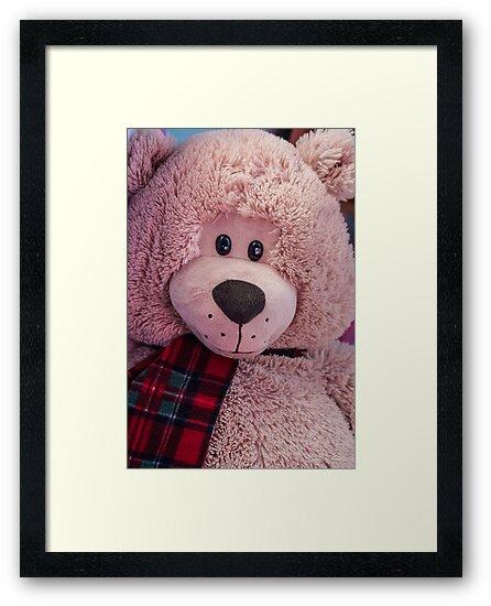 Teddy by Jessica Manelis