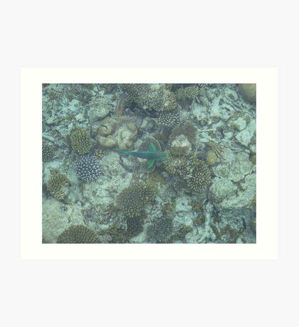 Corel Fish Art Print