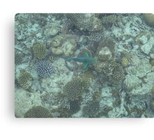 Corel Fish Canvas Print