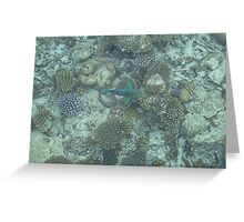 Corel Fish Greeting Card