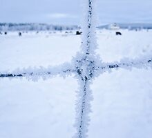 Snow on the Fence  by Tim Topping
