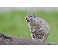 Ground Squirrel Chirping, Yellowstone National Park Photographic Print
