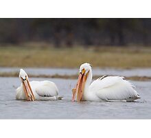 Pelicans at Yellowstone National Park Photographic Print
