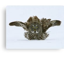 Fluff and puff Canvas Print