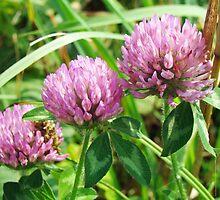 Pink Clover Wildflower - Trifolium pratense by MotherNature