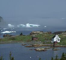 That's so Newfoundland! by Jean Knowles
