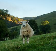 Sheep at Dovedale, Peak District by kirsty-nolimits