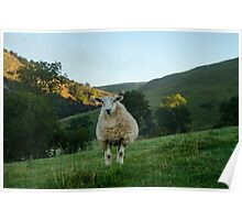 Sheep at Dovedale, Peak District Poster