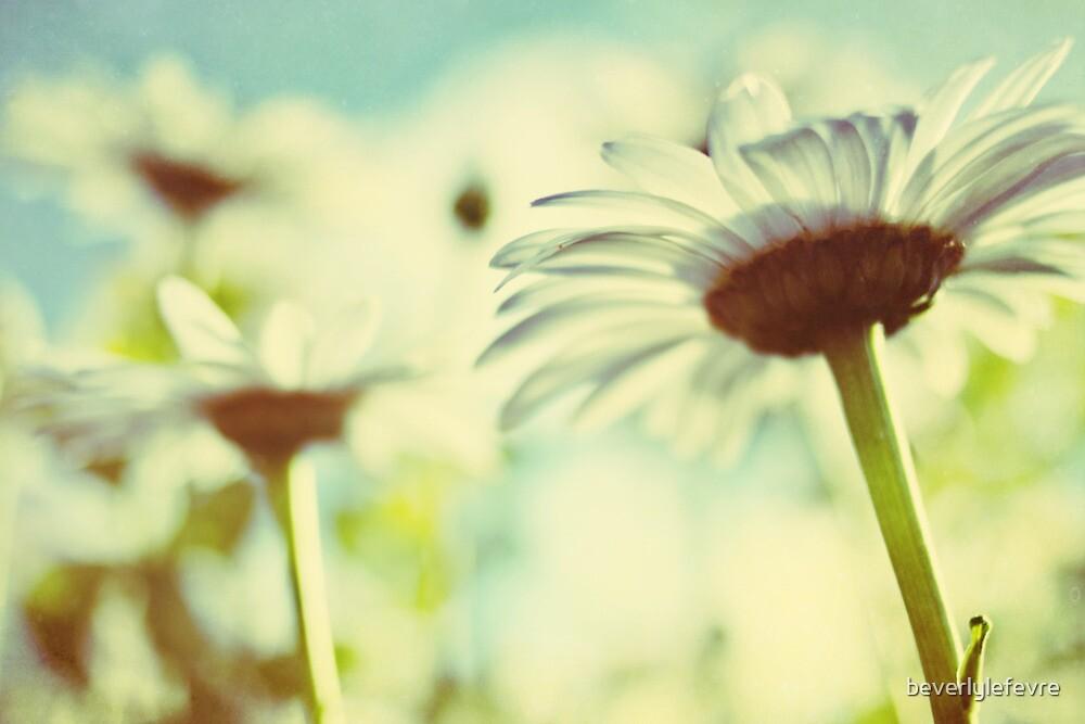 the daisy garden by beverlylefevre