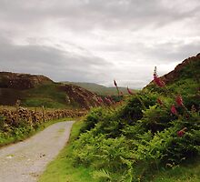 The Sychnant Pass by RH-prints