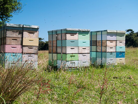 beehives 4 by Anne Scantlebury