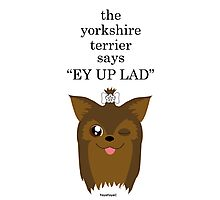 """the yorkshire terrier says """"EY UP LAD"""" Photographic Print"""