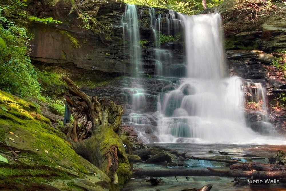 Sheldon Reynolds Waterfall Mist On Driftwood by Gene Walls