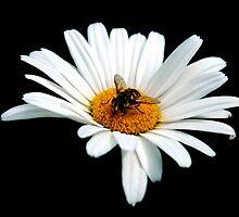 Pollinator  by Luke Lansdale