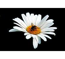 Pollinator  Photographic Print
