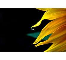Dew diamond Photographic Print