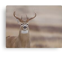 Whitetail Buck Portrait featuring rut swollen neck Metal Print